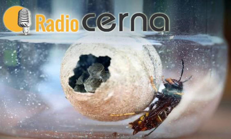 Radio Cerna 22out2017