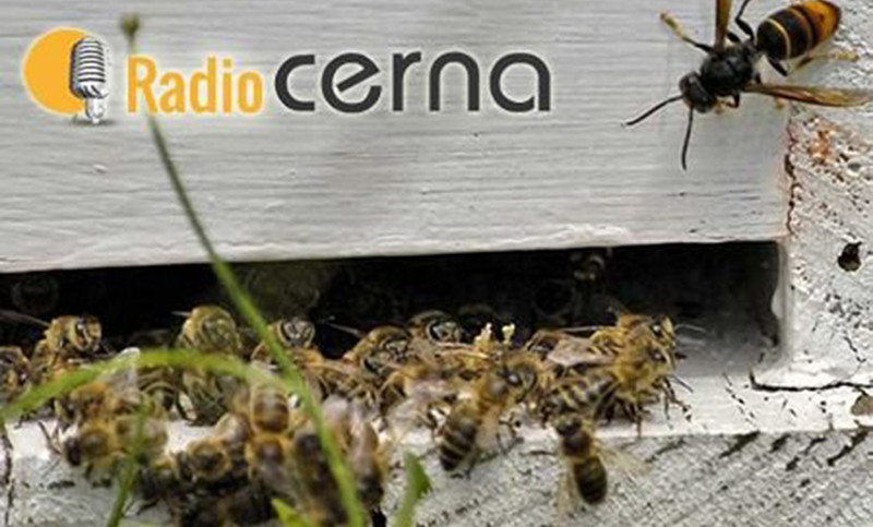 Radio CERNA #04oct2017