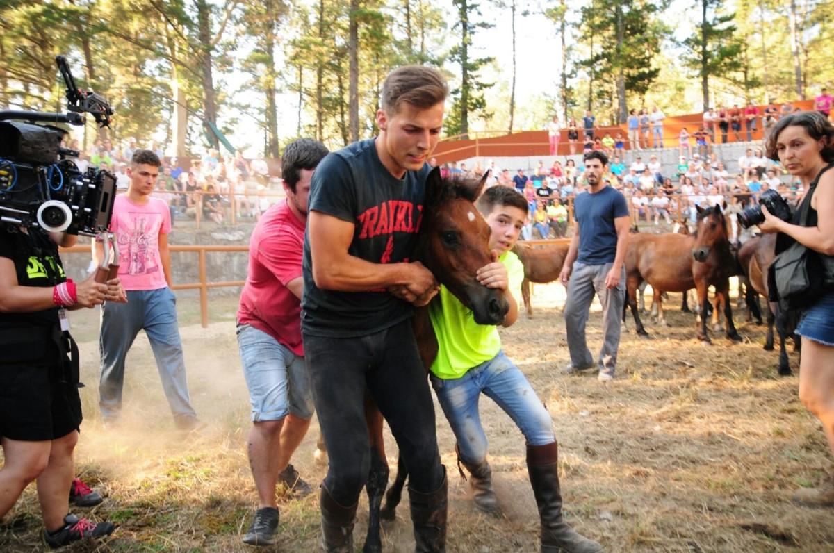 Amil se prepara para rapar un centenar de caballos en el curro del monte Acibal