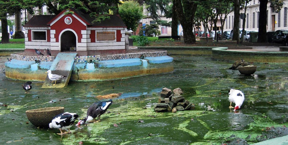 Animalistas desaconsellan a solta de parrulos no estanque for Estanque para patos jardin